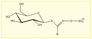 Slika 4 Osnovna struktura glukozinolatov